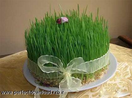 سبزه عید هفت سین چقدر آب برای رشد نیاز دارد ؟